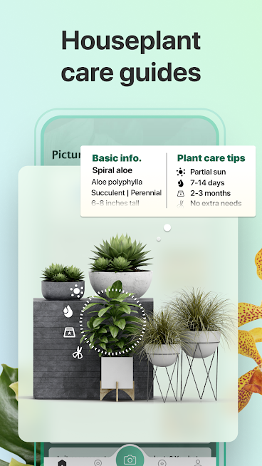 دانلود PictureThis 2.12 – برنامه شناسایی و معرفی گیاهان برای اندروید